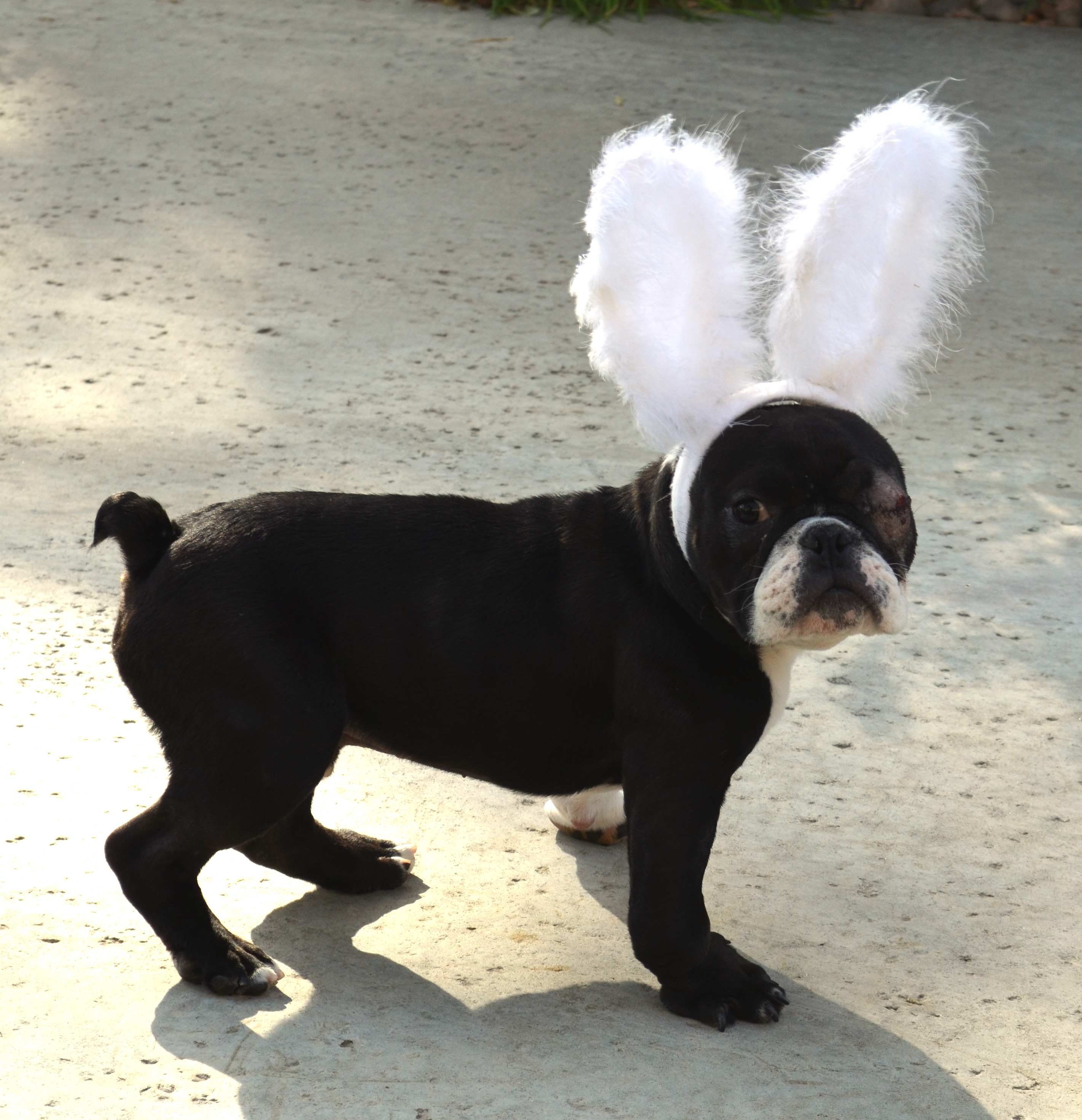 Happy Easter from Hercules Bunny!