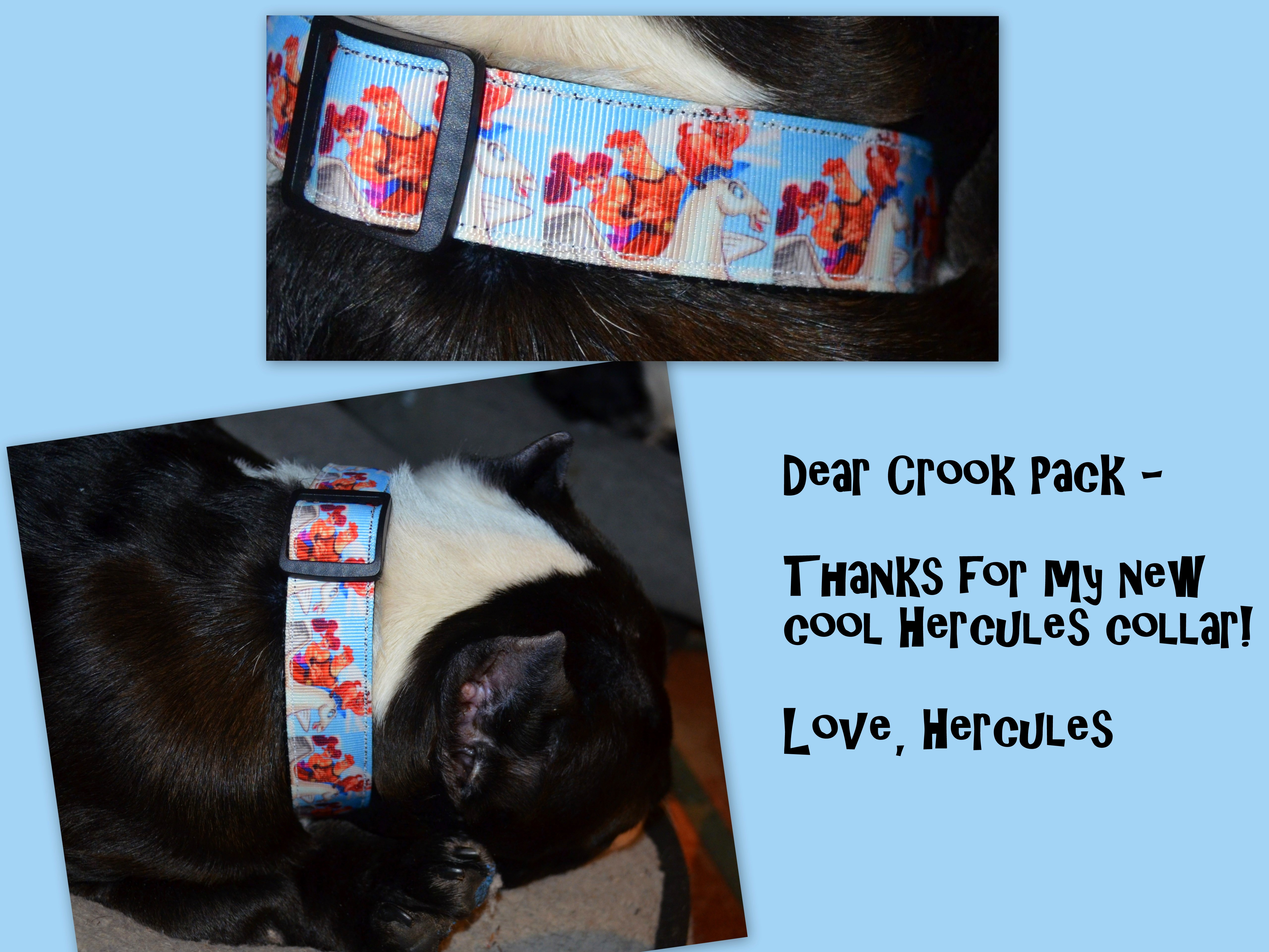 Hercules is now sporting an awesome collar featuring his namesake thanks to the Crook Pack!